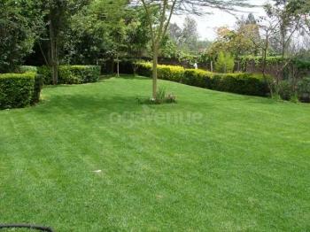 Langata Botanical Gardens 4